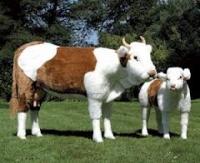 Консервы мясные и с субпродуктами